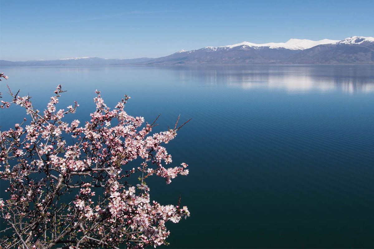 Blossom and Great Prespa Lake- ©Julian Hoffman/ MBPNP Archive